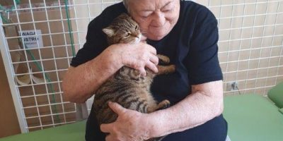 Felinotherapie