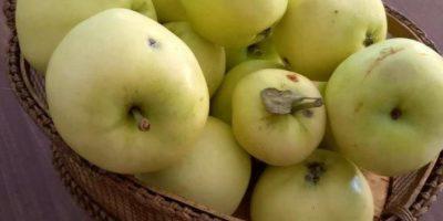 Äpfel-Saison